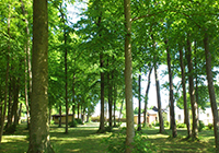 Camping-Le-Bois-Fleuri - Illiers Combray