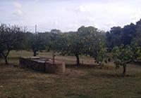 Camping-a-la-ferme-Jauffret - Gassin