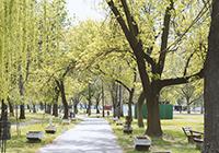 Szegedi-Partfurdo-Kemping-es-Apartman - Szeged