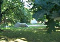 Camping-2-Laghi - Civate