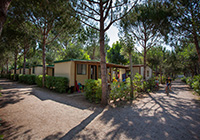Campsite-Village-Mareblu - Cecina