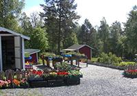Storsjö Camping & Trädgård - Skog