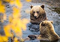 Ranua Zoo Camping - Ranua